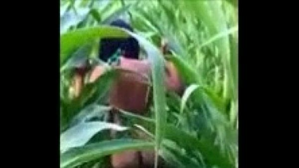 Pinay fucked in the corn field